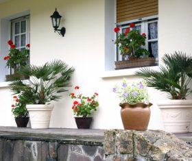 Flowers on the windowsill Stock Photo 02