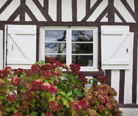 Flowers on the windowsill Stock Photo 04