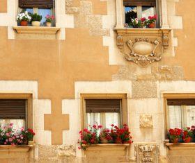 Flowers on the windowsill Stock Photo 05