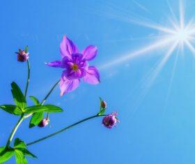 Flowers under the sun Stock Photo