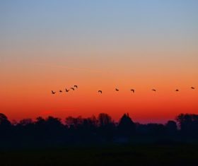 Flying birds on sunset sky Stock Photo