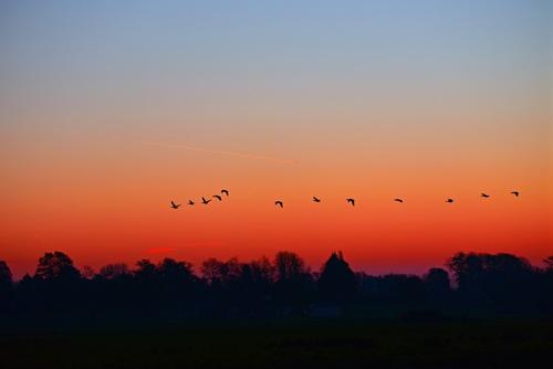 Flying birds on sunset sky Stock Photo