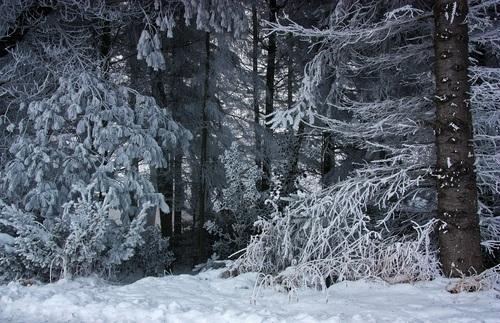Forest snow scene Stock Photo 06
