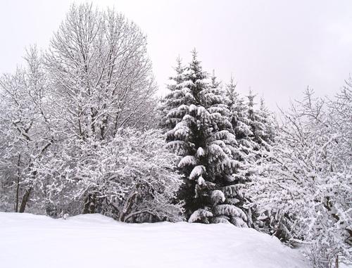Forest snow scene Stock Photo 10