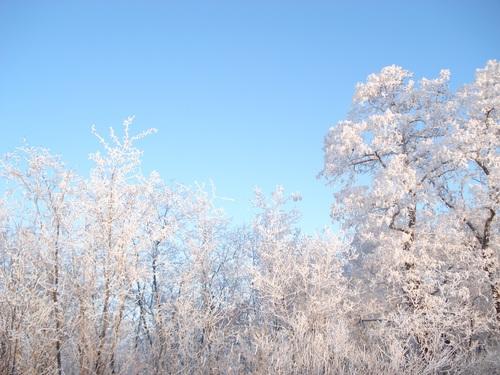 Forest snow scene Stock Photo 11