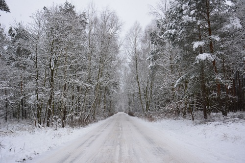 Forest snow scene Stock Photo 13