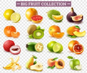 Fruits set of vector illustrations 02