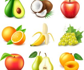 Fruits set of vector illustrations 06