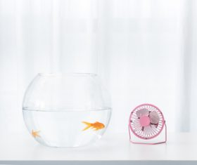 Goldfish in a fish tank Stock Photo 03
