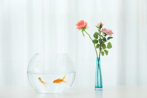 Goldfish in a fish tank Stock Photo 05