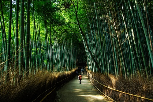 Green bamboo forest Stock Photo 01
