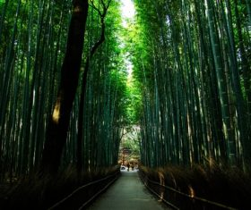 Green bamboo forest Stock Photo 02