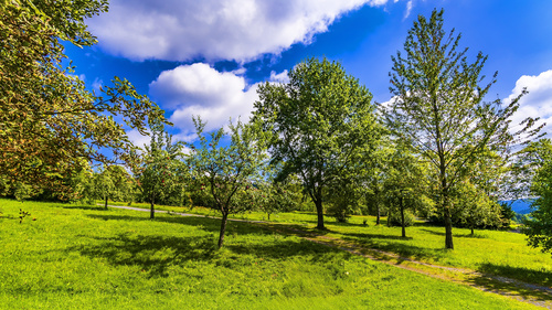 Green natural scenery Stock Photo 09