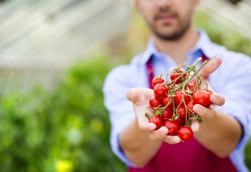 Hand holding tomato Stock Photo