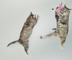 Jumping Cats Stock Photo