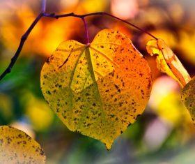 Macro Photography Autumn Leaves Stock Photo