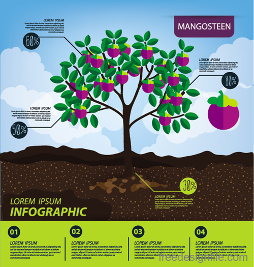 Mangosteen infographic template vector material