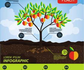 Peach infographic template vector material
