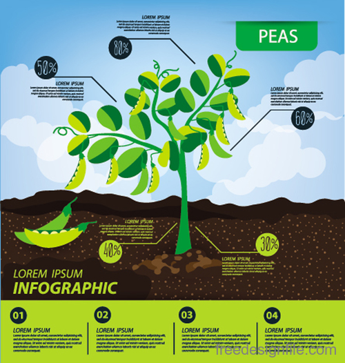 Peas infographic template vector material
