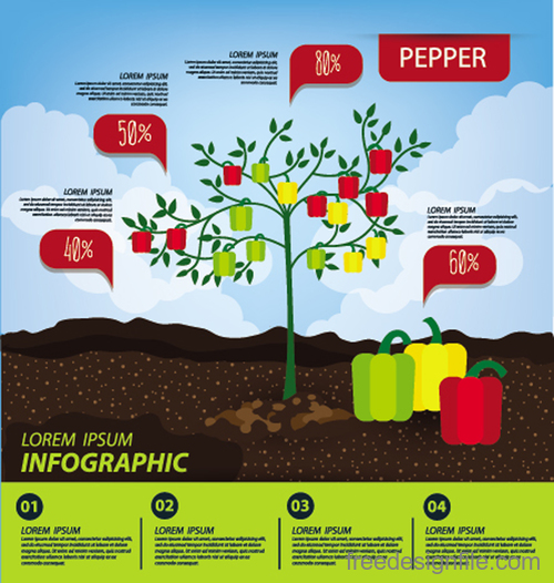 Pepper infographic template vector material