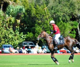 Polo sport Stock Photo 01