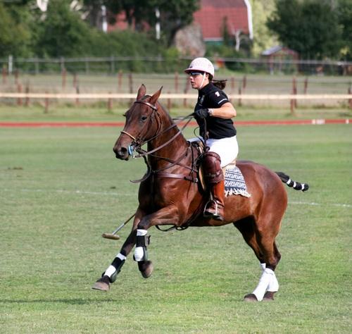 Polo sport Stock Photo 02
