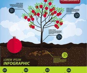 Pomegranate infographic template vector material
