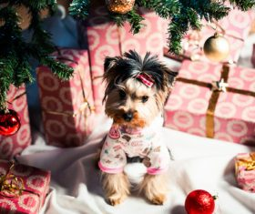 Puppy and gift box under the Christmas tree Stock Photo