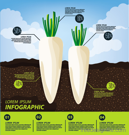 Radish infographic template vector material