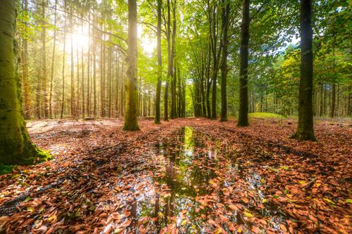 Secluded woods Stock Photo 03