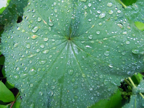 Small drops of water on green leaf Stock Photo 01