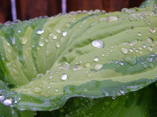 Small drops of water on green leaf Stock Photo 06
