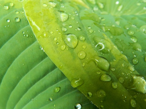 Small drops of water on green leaf Stock Photo 08