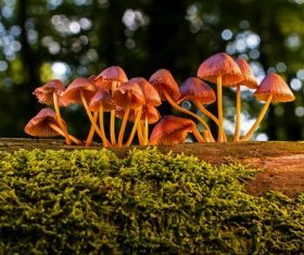 Small mushroom growing on the forest tree Stock Photo