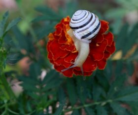 Small snail on flower Stock Photo