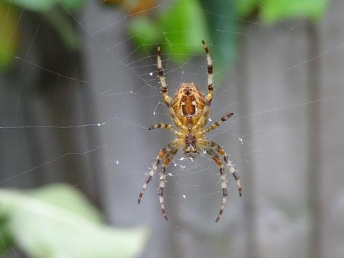 Spider on spider web Stock Photo 02