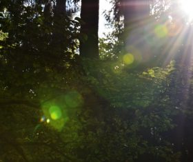 Sunlight through the tree to sew beautiful scenery Stock Photo 01