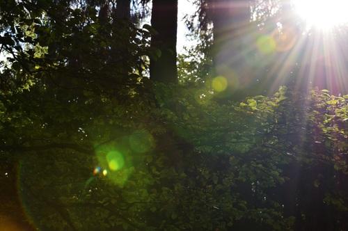 Sunlight through the tree to sew beautiful scenery Stock Photo 01