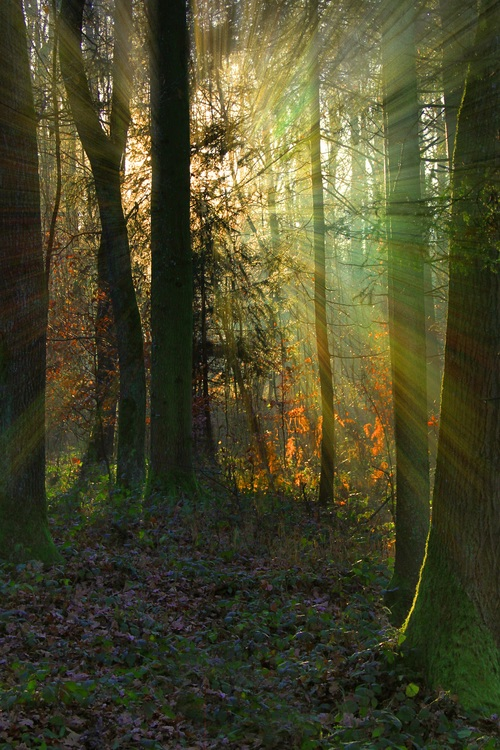 Sunlight through the tree to sew beautiful scenery Stock Photo 02