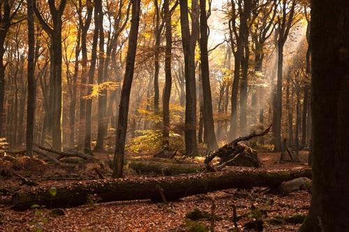 Sunlight through the tree to sew beautiful scenery Stock Photo 04