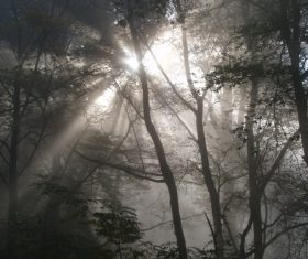 Sunlight through the tree to sew beautiful scenery Stock Photo 05