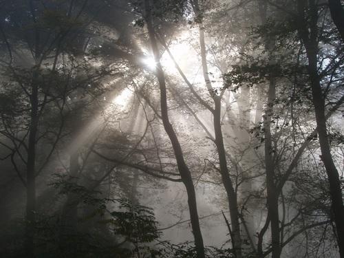 Sunlight through the tree to sew beautiful scenery Stock Photo 05