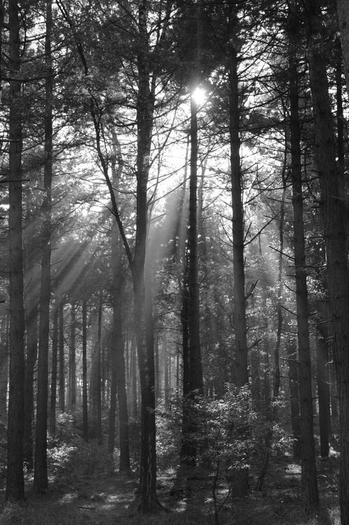 Sunlight through the tree to sew beautiful scenery Stock Photo 07