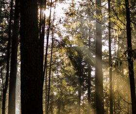 Sunlight through the tree to sew beautiful scenery Stock Photo 08
