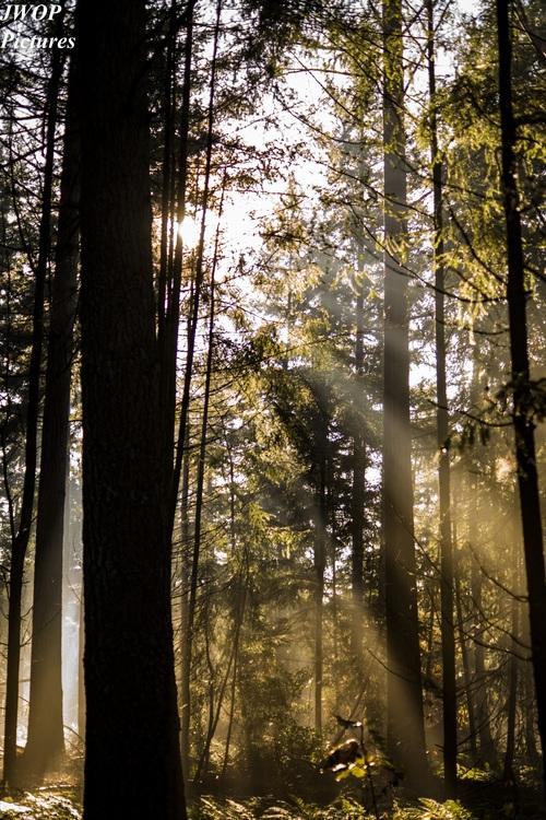 Sunlight through the tree to sew beautiful scenery Stock Photo 08