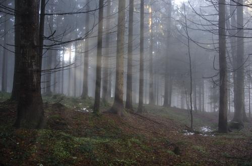 Sunlight through the tree to sew beautiful scenery Stock Photo 09
