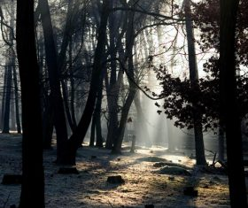 Sunlight through the tree to sew beautiful scenery Stock Photo 11