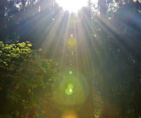 Sunlight through the tree to sew beautiful scenery Stock Photo 12