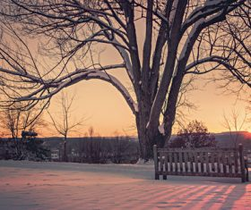 Sunrise in a Snowy Park Stock Photo