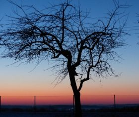 Tree in the evening Stock Photo 05